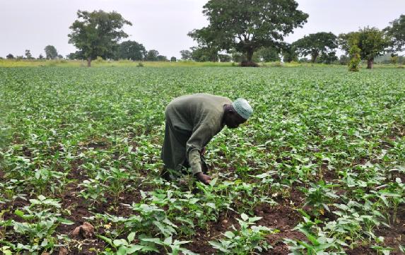 nigerian-farmer2