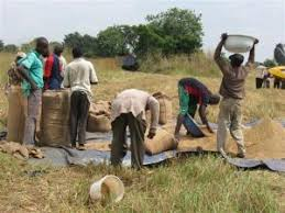 youths in agriculture