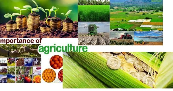 agriculture importance