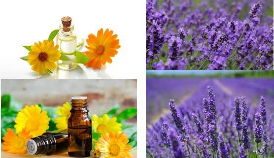 Flower Aromatherapy
